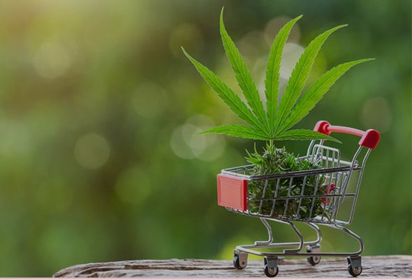 Online Cannabis Stores in Ontario